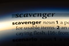 Scavenger. Word in a dictionary.  concept royalty free stock photo