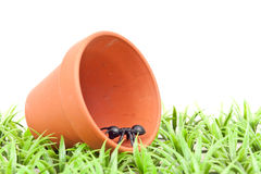 Scavenging Ant in Clay Pot Royalty Free Stock Photo