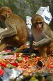 Scavenging Monkeys. In Kathmandu, Nepal stock photo