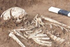 Scavi Archaeological Ossa umane dello scheletro, crani di resti nella terra, con i manufatti trovati nella tomba, barattolo ceram immagini stock libere da diritti