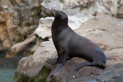 Sceau de mer Photo libre de droits