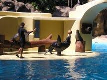 Sceaux à l'aquarium Images libres de droits