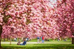 SCEAUX, FRANCIA - 15 DE ABRIL DE 2019: Gente que disfruta de la estación de la flor de cerezo en Parc de Sceaux, Francia fotografía de archivo