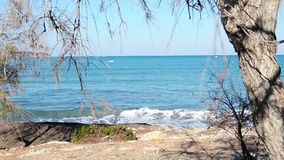 Sceene de vagues de mer regardant par des branches d'arbre, jour ensoleillé, pousse statique banque de vidéos