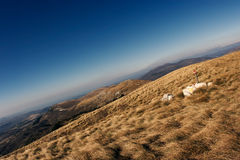 Sceenery da montanha Foto de Stock
