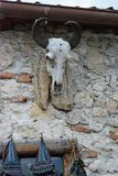Sceleton head of an animal on the wall. Sceleton head used as a decoration in the fortress of Rushnov, Romania royalty free stock photography