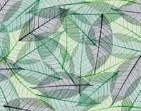 Sceletons de hojas imagen de archivo libre de regalías