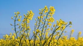 Scelga i fiori della violenza davanti ad un campo della violenza Fotografia Stock