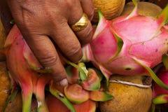 Scelga i frutti immagini stock libere da diritti