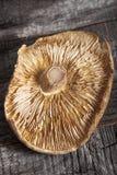 Scelga il fungo di shiitake secco Fotografia Stock