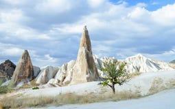 Scelga l'albero verde nel selvaggio in Cappadocia, Turchia immagine stock libera da diritti