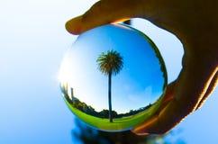 Scelga la fotografia alta della palma nella chiara palla di cristallo Fotografie Stock