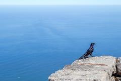 Scelga lo storno ad ali rosse appollaiato sull'alta parete di pietra sopra il mare Fotografia Stock
