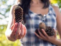 Scelta d'offerta con il cono del pino Immagine Stock Libera da Diritti
