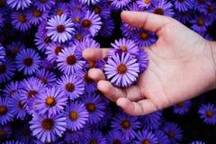 Scelta del fiore Fotografia Stock