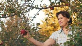 Scelta della donna Apple stock footage