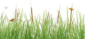 scena łąkowy biel Zdjęcie Royalty Free