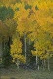 Autumn Scene 272-3-5 Fotografia Stock Libera da Diritti