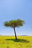 Scena africana Fotografie Stock