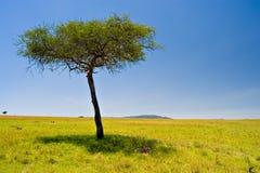 Scena africana Immagini Stock