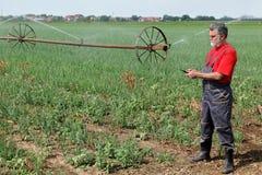 Scena agricola, agricoltore nel campo della cipolla con il sistema di innaffiatura Immagine Stock