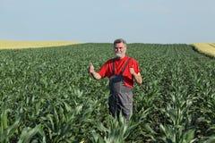 Scena agricola, agricoltore nel campo di grano Fotografia Stock