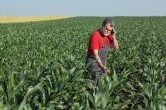 Scena agricola, agricoltore nel campo di grano Immagini Stock Libere da Diritti