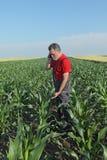 Scena agricola, agricoltore nel campo di grano Fotografie Stock Libere da Diritti