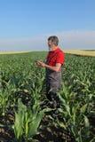 Scena agricola, agricoltore nel campo di grano Fotografia Stock Libera da Diritti