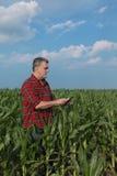 Scena agricola, agricoltore nel campo di grano verde Immagine Stock