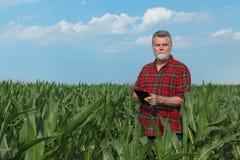 Scena agricola, agricoltore nel campo di grano verde Fotografia Stock Libera da Diritti