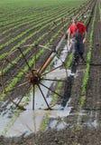 Scena agricola, agricoltore nel giacimento della paprica con il sistema di innaffiatura Fotografia Stock