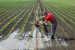 Scena agricola, agricoltore nel giacimento della paprica con il sistema di innaffiatura Fotografie Stock Libere da Diritti