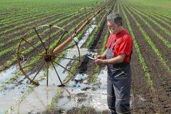 Scena agricola, agricoltore nel giacimento della paprica con il sistema di innaffiatura Fotografie Stock