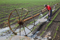 Scena agricola, agricoltore nel giacimento della paprica con il sistema di innaffiatura Immagine Stock Libera da Diritti
