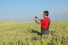 Scena agricola, agricoltore nel giacimento di grano che prende foto Immagine Stock