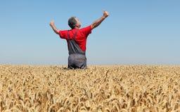Scena agricola, agricoltore nel giacimento di grano, tempo di raccolto Fotografia Stock