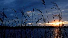 Scena al rallentatore del lago al tramonto con le canne del litorale e principalmente il cielo nuvoloso archivi video
