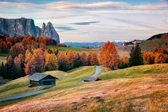 Scena all'aperto incredibile in Alpe di Siusi con bello giallo Fotografie Stock