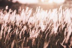 Scena arancio del fiore di salto dell'erba con luce solare Fotografia Stock Libera da Diritti