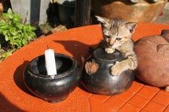 Scena artistica con il gatto del bambino sulla tavola Fotografia Stock
