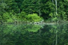 Scena calma di primo mattino sul fiume Fotografia Stock