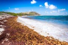 Scena caraibica della spiaggia Fotografie Stock