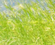 Scena che evidenzia il fogliame verde Fotografia Stock
