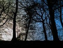 Scena con l'albero retroilluminato Immagini Stock