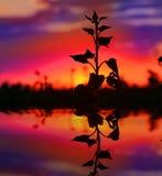 Scena con la pianta sul fondo di tramonto Fotografia Stock