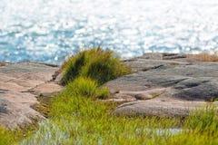 Scena costiera con erba dettagliata in priorità alta Fotografia Stock