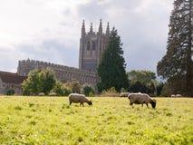 Scena cristiana inglese del campo di estate delle pecore che pascono chiesa dentro Fotografie Stock
