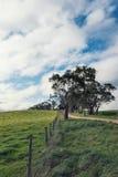 Scena d'agricoltura australiana con l'albero ed il recinto di gomma Immagine Stock Libera da Diritti