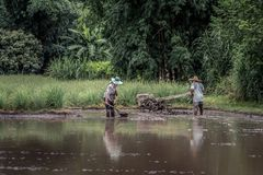 Scena d'agricoltura pittoresca della risaia in Tailandia Fotografia Stock Libera da Diritti
